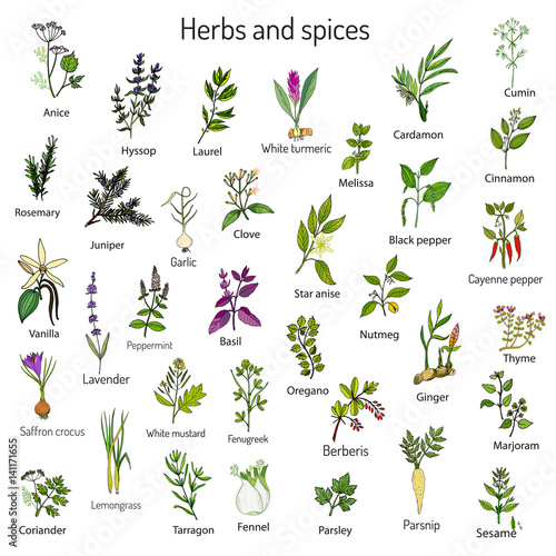 Hand drawn set of culinary herbs and spices