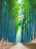 Fototapeta Bambus - Bamboo Groves, bamboo forest in Arashiyama, Kyoto Japan. © Travel Wild