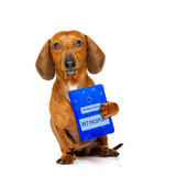 dog with european pet passport