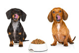 hungry sausage dachshund dogs
