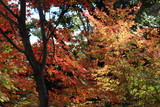 紅葉と緑葉