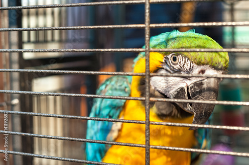 Caged macaw at Yuen Po Street bird market, Mong Kok, Hong Kong