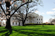 white house in spring with magnolia flower blossom