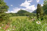Urlaub in den Bergen, Wiese mit Bergpanorama