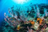 Undersea, Underwater life, fish, shoal, coral