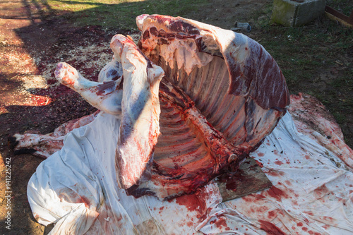 Whole carcass of bull right after cutting