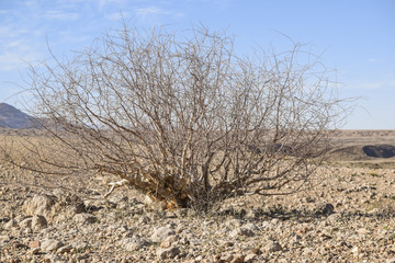 bush in Namibia