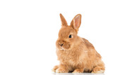 Adorable little brown rabbit isolated on white