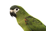 beautiful bird on white background, clipping path