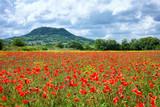 Poppy Field, Countryside