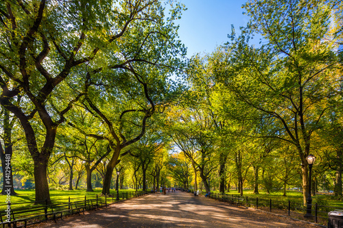 Foto Murales Beautiful park in beautiful city..Central Park. The Mall area in Central Park at autumn., New York City, USA