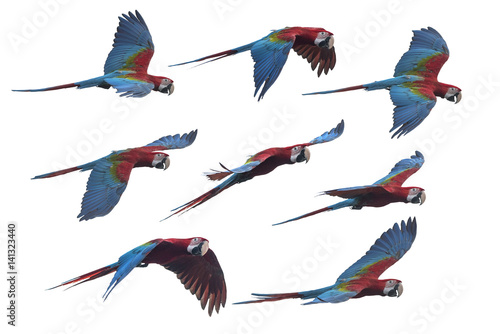 Set of macaw flying , Beautiful red and green macaw isolated on white background