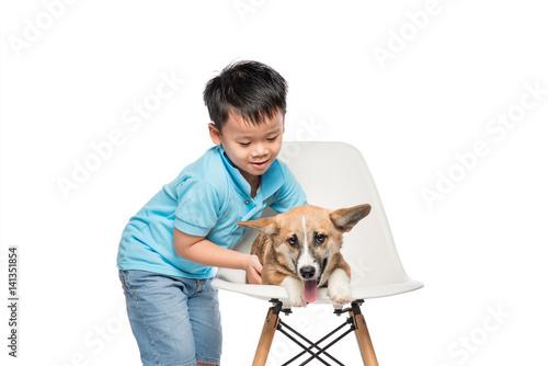 Kid boy playing with small pembroke corgi dog isolated on white background.