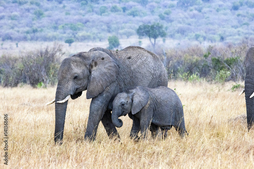 Poster Elephant and Calf