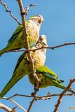 Pappagalli sull'albero