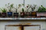 Fototapety Plants, flowerpots, flowerbed in the largest Buddhist temple Kek