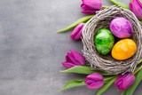 Fototapeta Spring greeting card. Easter eggs in the nest. Spring flowers tulips.