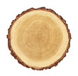 Quadro smooth cross section brown tree stump slice with age rings cut fresh from the forest with wood grain isolated on white