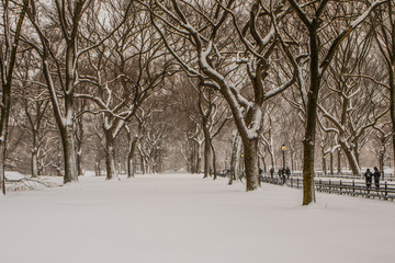 Blizzard in Central Park. Manhattan