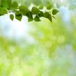 Summer garden, beauty seasonal backgrounds with beech tree and shiny bokeh