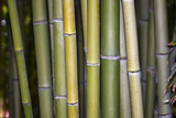 Growing bamboo background