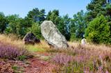 Megalithanlage während der Heideblüte in der Oldendorfer Totenstatt bei Amelinghausen