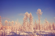 amazing winter landscape at sunset in forest