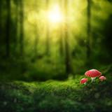 Fototapety Dark magic forest