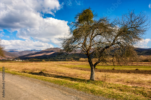 spring has sprung in rural area