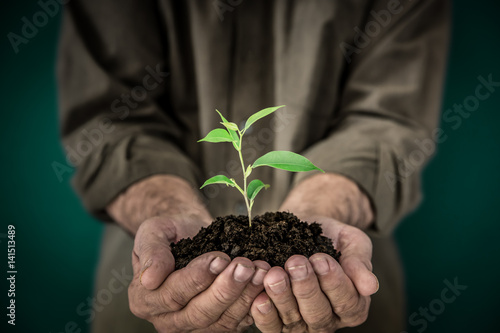 Senior man holding young plant