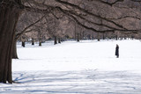 Woman checking her cellphone in the Central Park covered with snow after winter storm Stella