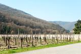 Springtime landscape of vineyard with wood on background