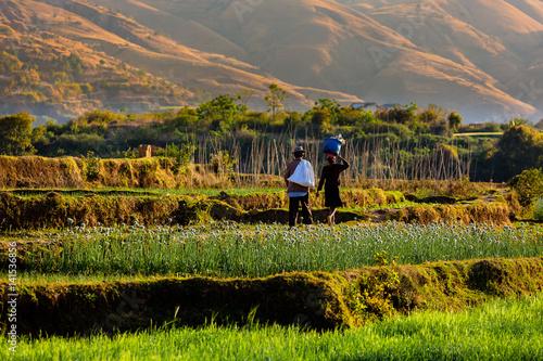 Wall mural Madagascar agricultural landscape