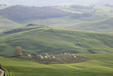 Tuscany landscape, with green hills, trees, soft curves