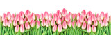 Tulip flowers banner Floral border Bunch pink blooms