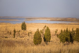 A beautiful early spring landscape with juniper trees at the lake