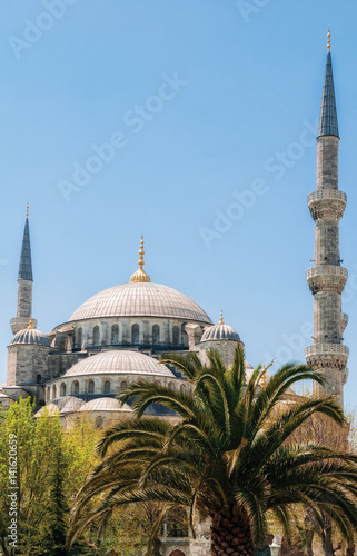 Poster Blue Mosque with palm tree in Istanbul