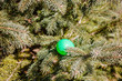 Colorful egg in pine tree branches. Egg hunting: traditional family activity on Easter day. Kids fun. Bright sun, hard shadows.