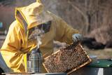 Apicolture con le api