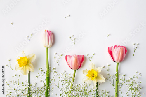Flat lay spring flowers. Tulip and narcissus. Top view
