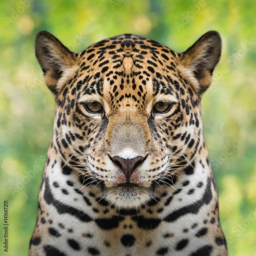 Foto op Plexiglas Panter Jaguar face close up