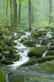 Stream, Spring Landscape, Great Smoky Mountains NP