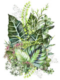 tropical composition. Watercolor illustration isolated on white background. Exotic leaves and herbs - 141724459