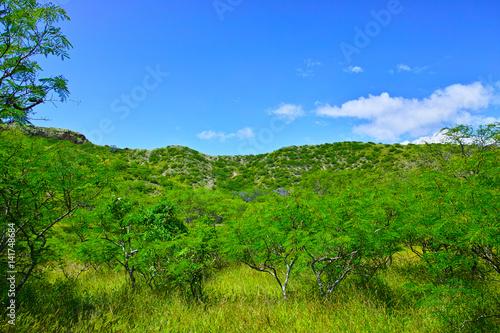 ハワイ ダイヤモンドヘッドの内部から見た風景