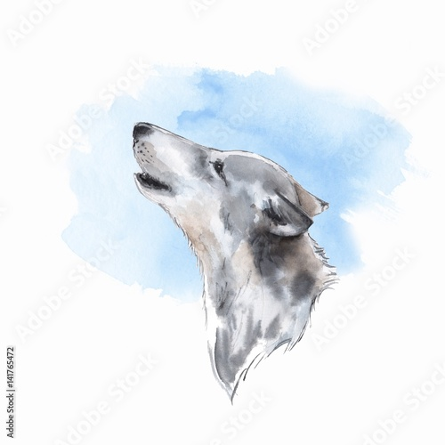 Wolf . Watercolor illustration. Blue background - 141765472