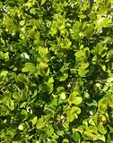 Fototapety fresh green leaves