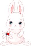 Cute Bunny Holds Lady Bug