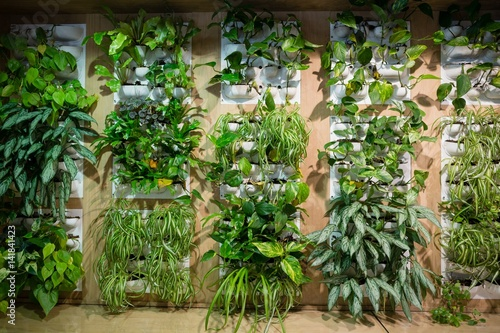 Green plants in office