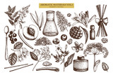 Vector floral collection. Vintage Hand drawn Perfumery and cosmetics ingredients set. Aromatic and medicinal plant. - 141854499