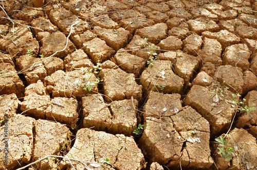 Deurstickers Droogte Dry cracked soil